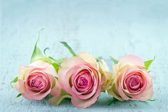 Drie roze rozen op lichtblauwe achtergrond stock fotografie