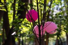 Drie roze stuk speelgoed ballons op een esdoornboom royalty-vrije stock fotografie