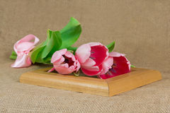 Drie roze tulpen met satijnlint die op het kader liggen Stock Foto