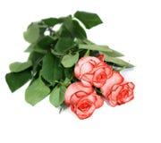 Drie rozen Stock Afbeeldingen