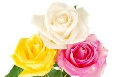 Drie rozen Royalty-vrije Stock Afbeelding