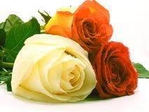 Drie rozen Royalty-vrije Stock Foto's