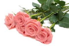 Drie rozen ligt Stock Foto