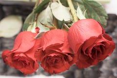 Drie rozen Rood nam geven bloemen toe De dag van de valentijnskaart `s royalty-vrije stock afbeeldingen