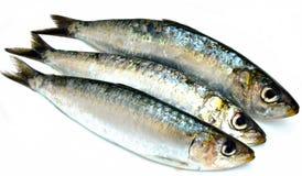 Drie sardines Royalty-vrije Stock Foto's