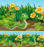 Drie scènes met groene slang in tuin stock illustratie
