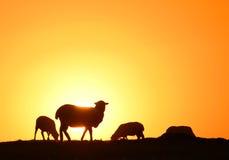 Drie schapen op gras Stock Foto