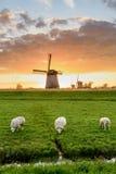 Drie schapen weiden en drie windmolens op een bewolkte dag in de vooravond Royalty-vrije Stock Afbeelding
