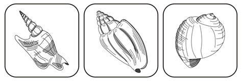 Drie shells Vector Illustratie