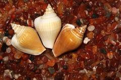 Drie shells liggen op overzeese stenen van rode kleur met elementen royalty-vrije stock foto's