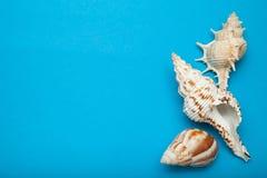 Drie shells van diverse soorten op een blauwe achtergrond Vakantieconcept, exemplaarruimte royalty-vrije stock afbeelding