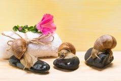 Drie slakken die op stenen op een kuuroord achtergrondconcept zitten Stock Fotografie