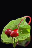 Drie Spaanse pepers op blad Stock Afbeelding