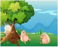 Drie speelse molehogs dichtbij de oude boom vector illustratie