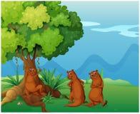Drie speelse wilde dieren dichtbij de grote oude boom royalty-vrije illustratie