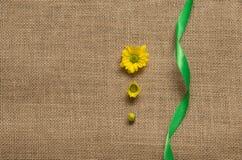 Drie stadia van bloeiende madeliefjes - camomiles op de jute Royalty-vrije Stock Foto's