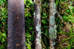 Drie stukken die van droog hout op gras in het hout liggen, a vormen Stock Afbeelding