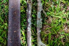 Drie stukken die van droog hout op gras in het hout liggen, a vormen Royalty-vrije Stock Afbeelding