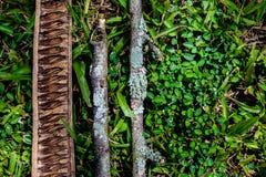 Drie stukken die van droog hout op gras in het hout liggen, a vormen Royalty-vrije Stock Fotografie