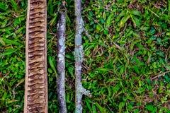 Drie stukken die van droog hout op gras in het hout liggen, a vormen Royalty-vrije Stock Foto's