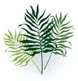Drie takjes met lange bladeren Royalty-vrije Stock Foto