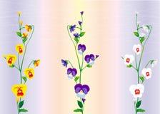 Drie takken van viooltjes Stock Foto's