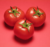 Drie Tomaten op Rood Stock Afbeeldingen