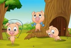 Drie varkens bij het bos stock illustratie