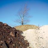 Drie veelkleurige steenheuvels en naakte boom Royalty-vrije Stock Afbeeldingen