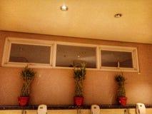 Drie vensters en drie bloemen stock fotografie