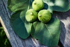 Drie vers geplukte fig. op een vijgeblad en een houten bank in gevlekte zonneschijn royalty-vrije stock foto