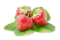 Drie Verse Aardbeien met Bladeren Royalty-vrije Stock Afbeelding
