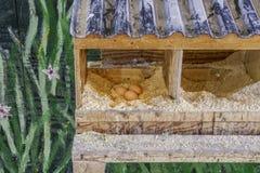 Drie verse eieren die in een artsy geschilderde met de hand gemaakte kippenstaatsgreep liggen royalty-vrije stock foto