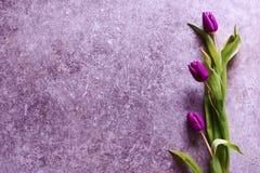 Drie violette purpere tulpen op grungeachtergrond royalty-vrije stock foto