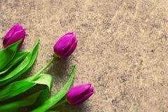 Drie violette purpere tulpen op grungeachtergrond stock afbeeldingen