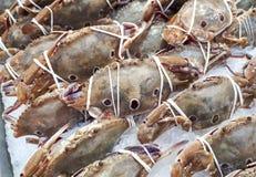 Drie-vlek zwemmende krabben Royalty-vrije Stock Afbeeldingen