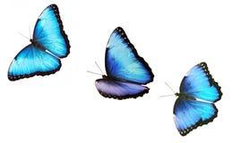 Drie vliegende heldere mannelijke blauwe die morphovlinder op witte achtergrond wordt geïsoleerd Royalty-vrije Stock Fotografie