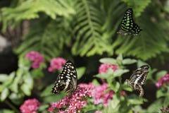 Drie Vlinders Stock Foto's