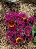 Drie vlinders stock foto