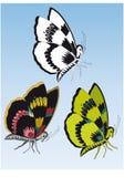 Drie vlinders van verschillende kleuren Stock Foto