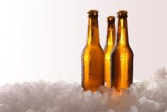 Drie volledige bierflessen op ijs en witte achtergrond stock foto's