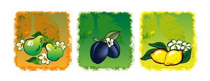 Drie vruchten Royalty-vrije Stock Foto's