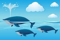 Drie walvissen die in oceaan zwemmen vector illustratie