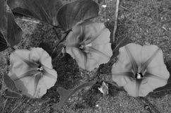 Drie wilde bloemen groeien in tropisch strand Stock Afbeelding