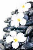 Drie witte Frangipani-bloemen op zwarte zenstenen sluiten omhoog royalty-vrije stock fotografie