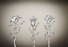 Drie witte lelies op vignetachtergrond Royalty-vrije Stock Foto's