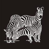 Drie zebras royalty-vrije illustratie