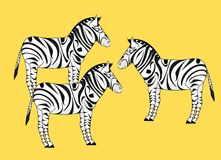 Drie zebras Stock Foto