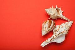 Drie zeeschelpen op een rode achtergrond De ruimte van het exemplaar stock afbeeldingen