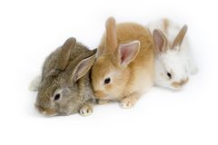Drie zoete babykonijnen stock fotografie